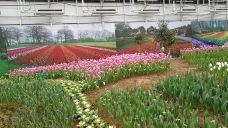 茶陵县观垅里刨花楠种植有限公司-茶陵-滇国剑客