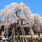 奈良背包客賓館