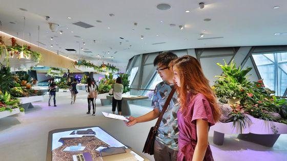 Singapore Jewel Changi Experience Studio Ticket