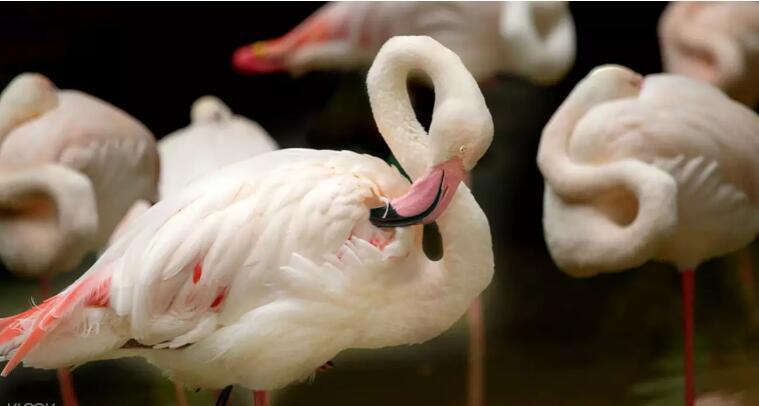 愛化摩沙野生動物園門票
