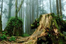 阿里山国家风景区-嘉义-尊敬的会员