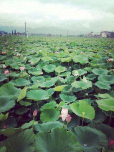 荷花博览园-萍乡-等风来