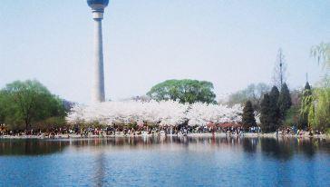 北京 玉渊潭公园1 上午1.16.09