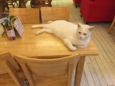 猫的天空之城概念书店(周庄店)-周庄-136****0018