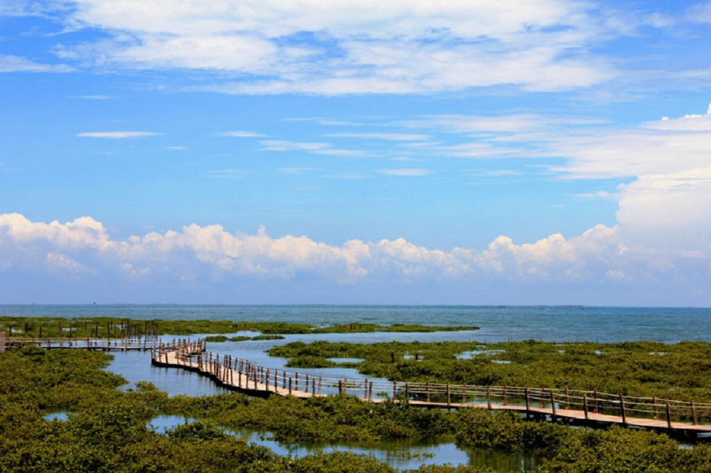 Beihai Golden Bay Mangrove Park Ticket