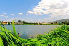 大理西湖-洱源-鱼鱼众生