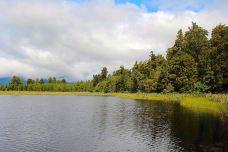 马松森湖-新西兰-向日葵