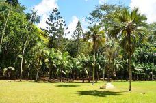 庞普勒斯植物园-毛里求斯-弱冠年华