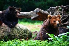 长隆野生动物世界-广州-老五oldfive