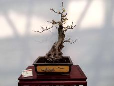 鄢陵国家花木博览园-鄢陵-孟氏老树