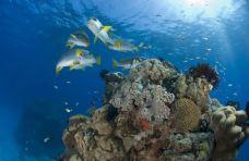 大堡礁-大堡礁-SASADING88