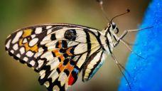 Jumalon蝴蝶保护区