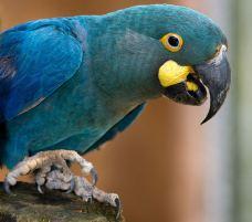 圣保罗动物园-圣保罗-42931