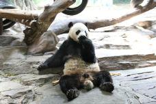 长隆野生动物世界-广州-...
