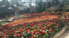 南山植物园-重庆-kitty睿