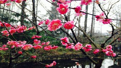 武汉植物园 (18)