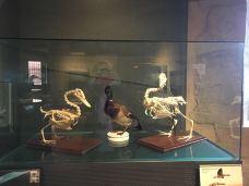 安纳西城堡博物馆-安纳西-ppebblee