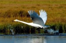 巴音布鲁克国家级野生动物类型自然保护区-巴音郭楞-koyama喵