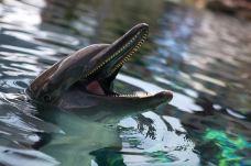 圣淘沙名胜世界海洋生物园-圣淘沙岛-程诗然