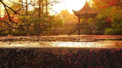 武汉植物园图片4