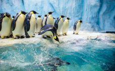 企鹅馆-珠海长隆海洋王国-珠海-赖宝小乖