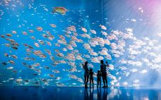 鲸鲨馆内水族箱7-珠海长隆海洋王国-珠海-赖宝小乖