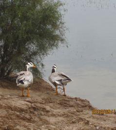 垦利区游记图文-大美黄河口,栖息鸟天堂