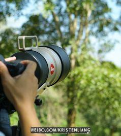 甲米游记图文-泰國拍鳥全紀錄:曼谷、清邁、甲米