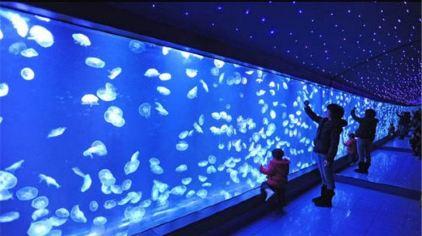 南京海底世界08