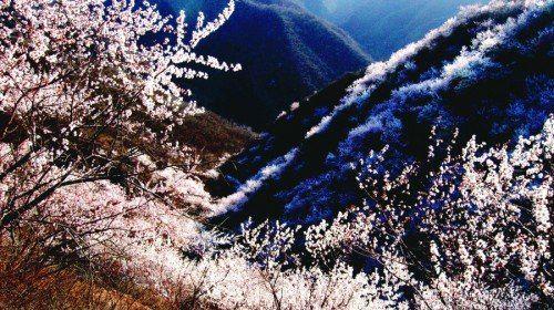 翠楓山自然風景區門票