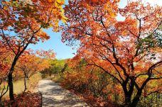 黄河丹峡旅游风景区-渑池-赖宝小乖