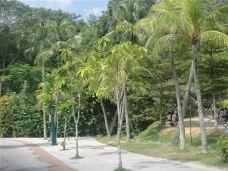 沙滩-圣淘沙岛-新加坡-nnz324