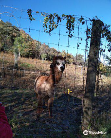 Parc Animalier de Casteil-东比利牛斯山脉