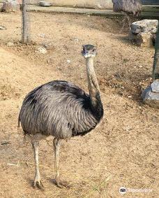 Faruk Yalcin Zoo-达卡
