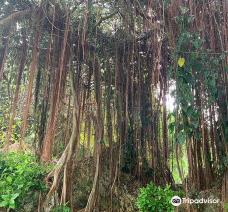 Andromeda Botanic Gardens-巴斯赫巴