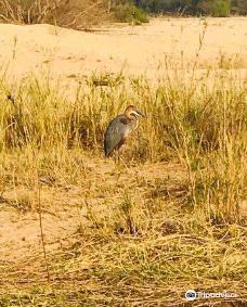 Sabi Sand Game Reserve-萨比